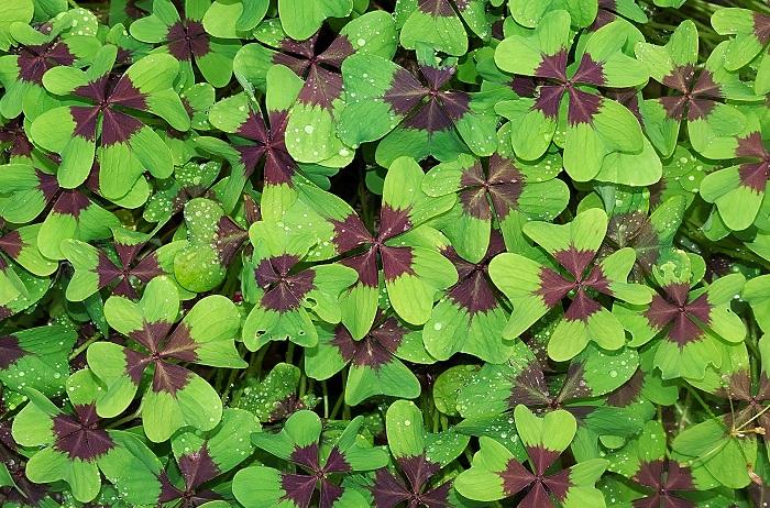 výživa-rastlín-má-svoje-pre-a-proti-vetagro