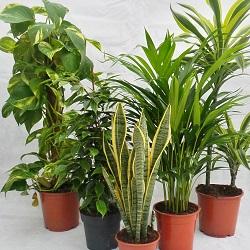 Výživa rastlín a jej dôležitosť